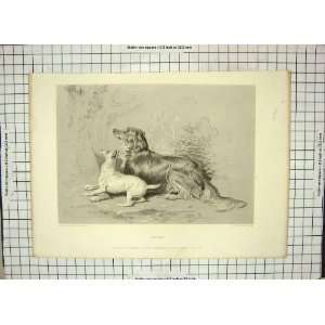 LANDSEER LEWIS PRINT PUPPY DOGS CAT TREE FOWLER