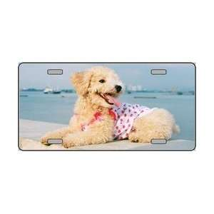 Poodle Dog Pet Novelty License Plates Full Color Photography License